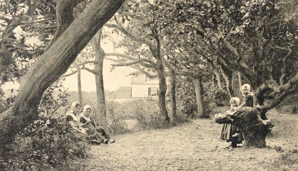 Historie van de Badplaats Domburg - Afbeelding van oud duinbos bij de badplaats Domburg