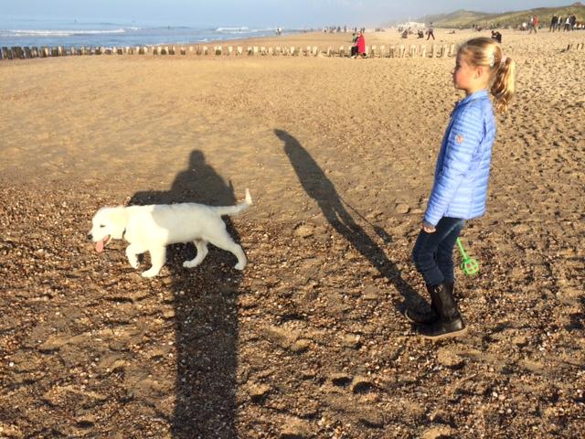 Honden op strand Domburg - VisitDomburg