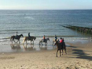 Honden op strand Domburg - Paarden op strand Domburg - VisitDomburg
